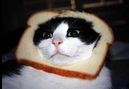 catbread